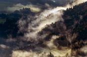 Morgen-Nebel