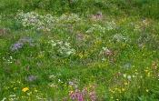 Feldrain-Flora Ende Mai