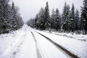 Kilometerlange Forstwege durchziehen die Wälder