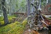 Urwälder nehmen grosse Flächen ein