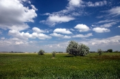 Puszta-Landschaft