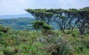 Landschaft mit Schirm-Akazien