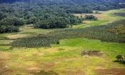 Offene Wald-Landschaft