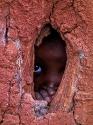 Ein Massai-Kind beobachtet uns aus seiner Hütte