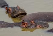 TANSANIA:Tiere