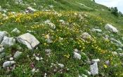 Blockhalden-Flora