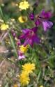 Blütenvielfalt