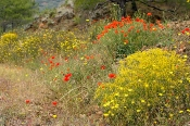 Ruderal-Flora